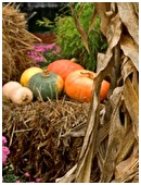 Here are some tips to promote an environmentally friendly and self-sufficient Halloween.