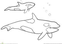 Orca Whale In The Ocean coloring page | Free Printable Coloring ... | 132x184