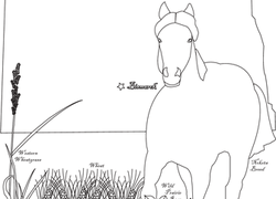 Garden Coloring Pages & Printables   Education.com