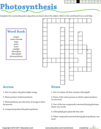It's just a picture of Science Crossword Puzzle Printable with regard to nursing assistant