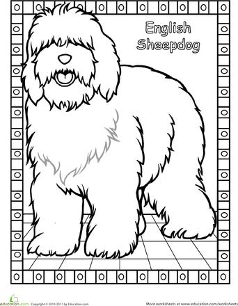 color the english sheepdog