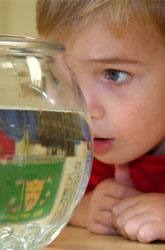 Curious Kids! Scientific Learning in Preschool