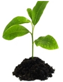 This fun and easy middle school science fair project idea  explores the topic of pollution and demonstrates if polluted soil affect the growth of green plants.