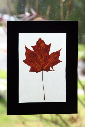 Second Grade Holidays & Seasons Activities: Capture Fall Leaves in Stained Glass