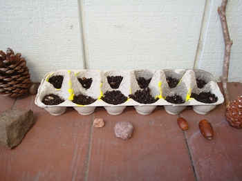 First Grade Science Activities: Egg Carton Garden