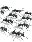 Ant behavior is closely related to light intensity. This free science fair project idea examines how fast ants dig when they are exposed to to light and dark.