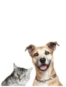 Free science fair project idea that examines the differences between cats and dogs. Analyze objective qualities rather than subjective ones.
