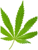 Research long-term effects and draft a questionnaire about frequency of marijuana use and average annual income. Interpret findings in a detailed report