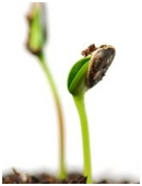 Explore if planting seeds in a certain direction will affect how fast it germinates.