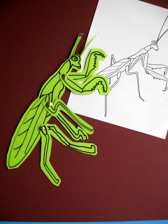 Preschool Arts & Crafts Activities: Praying Mantis Anatomy