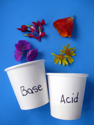 Fifth Grade Science Activities: Test for Acids or Bases Using...Flowers!