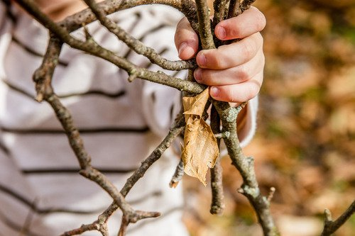 Kindergarten Reading & Writing Activities: Gratitude Tree