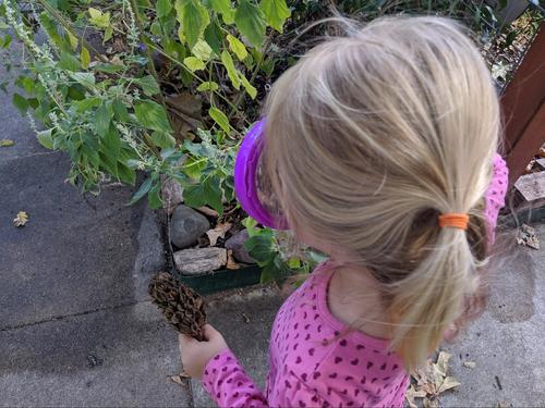 Preschool Science Activities: The Magic Magnifying Glass