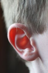 Kindergarten Science Science Projects: Hide and Go Listen: A Hearing Activity