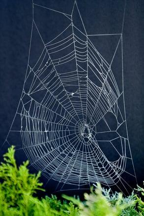 Third Grade Science Activities: Make Spider Web Art!