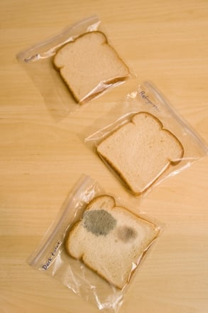 Middle School Science Activities: Bread Mold Experiment