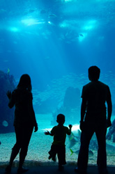5 Best Family-Friendly Day Trips