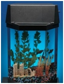 This experiment explores the most common colors that appear among a sample of crossbred guppies.