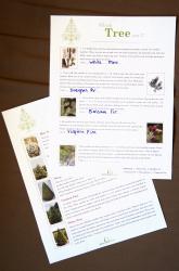 Third Grade Holidays & Seasons Activities: Explore Christmas Tree Science