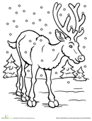 color the reindeer
