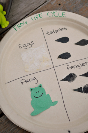 Kindergarten Science Activities: Craft the Frog Life Cycle