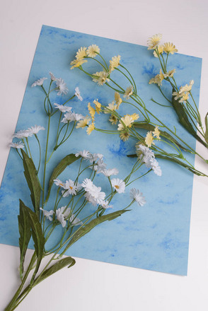 Middle School Science Activities: Be a Botanist: Make Herbarium Sheets