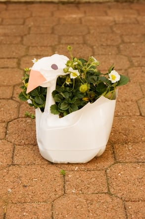 First Grade Holidays & Seasons Activities: Craft a Swan Plant Container