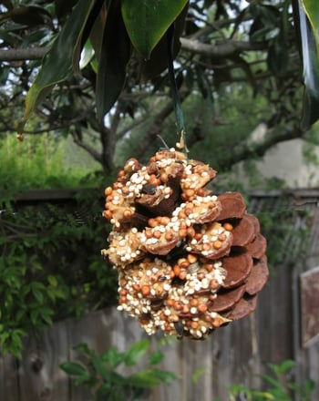 Kindergarten Holidays & Seasons Activities: Build a Pine Cone Bird Feeder!