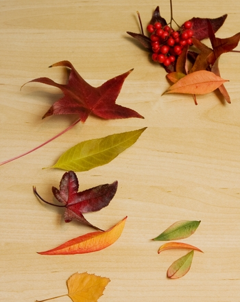 Preschool Holidays & Seasons Activities: Sorting and Ordering: Collect Autumn Leaves!