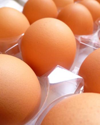 Third Grade Science Activities: Bounce an Egg