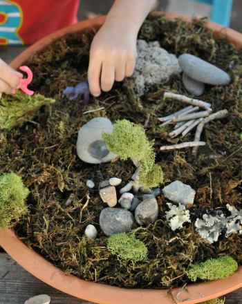 Second Grade Science Activities: Moss Terrarium