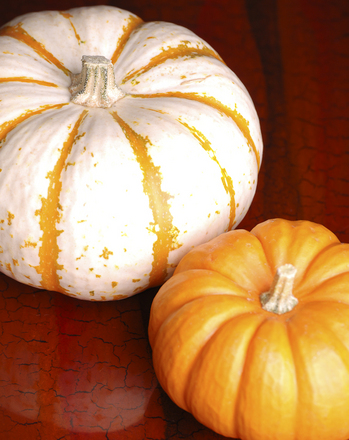 Kindergarten Science Activities: Pumpkin Science: To Float or Not to Float?