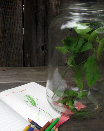 Preschool Science Activities: Bug Jar