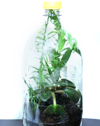 Fourth Grade Arts & Crafts Activities: Bottle Terrarium