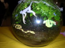 Build A Rainforest Terrarium Science Project Education Com