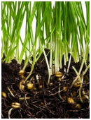 What's the science behind those out-of-sight roots? Find out if you can trick roots into growing in different directions.