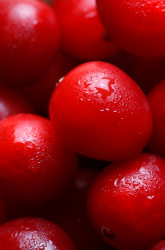 Four Great Cranberry Recipes for a Happy Thanksgiving