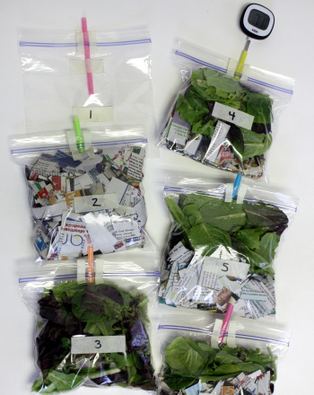Fourth Grade Science Science Projects: Compost Ingredients