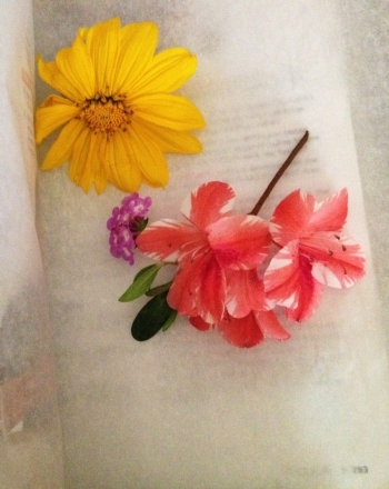 First Grade Science Activities: How to Press Flowers