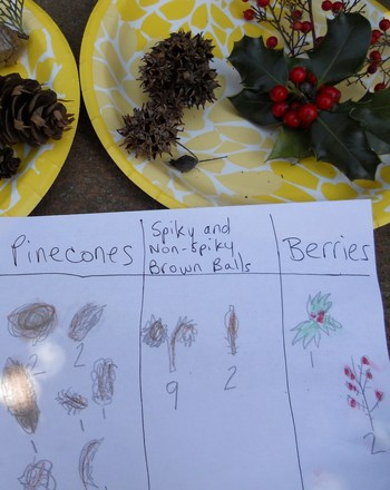 First Grade Science Activities: Hunt for Tree Products