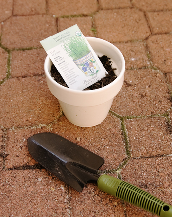 First Grade Holidays & Seasons Activities: Grow Your Own Grass