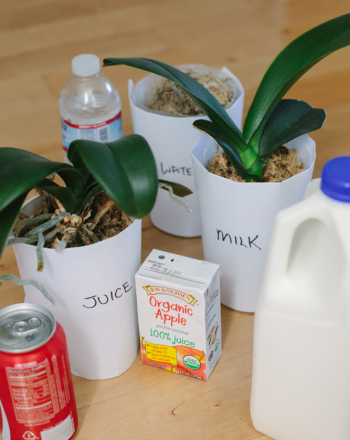Kindergarten Science Science Projects: Feeding Plants