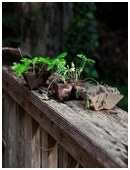This project is a vivid, concrete introduction to the basic but important idea that plants need sunlight and water to grow.