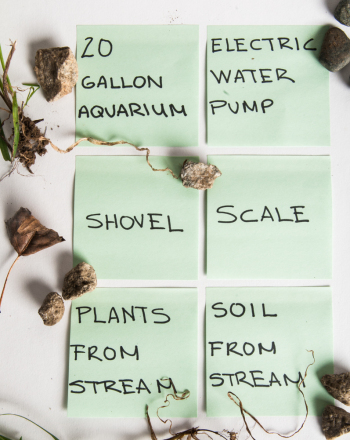Middle School Science Science Projects: Flow Rate and Plant Growth