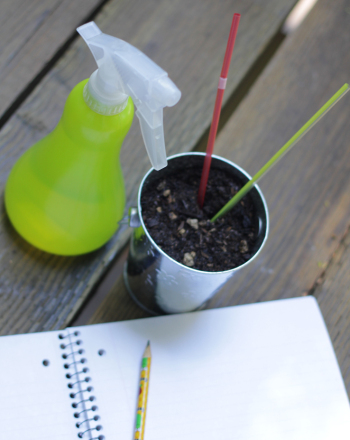 Fifth Grade Science Science Projects: What is Mulch?