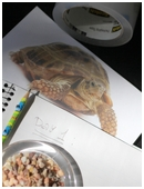 Kids will build a turtle habitat in order to observe the climate preferences of this cold-blooded reptile.