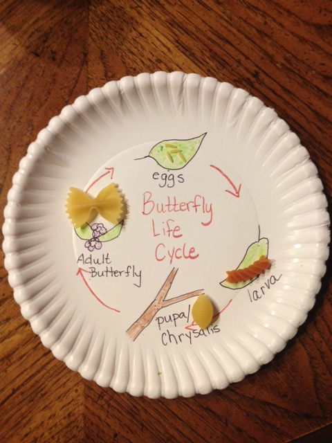 Second Grade Science Activities: Butterfly Life Cycle