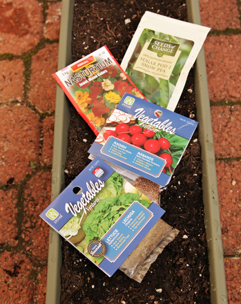 Kindergarten Science Activities: Plant a Fail-Safe Veggie Garden