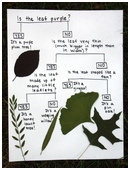 Use a dichotomous key to identify plants or animals.