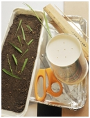 Kids learn how to prevent erosion by growing grass. They'll test soil with grass against raw soil in this revealing science fair project idea for 4th grade.